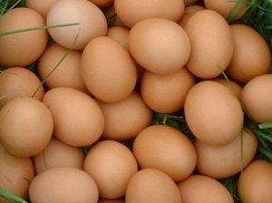 Užkandėlė su kiaušiniais