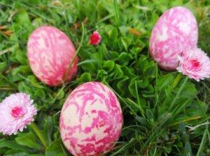 Kiaušiniai marginti su burokėliais